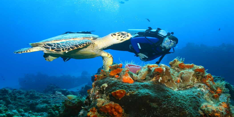 World Trips - Scuba Diving